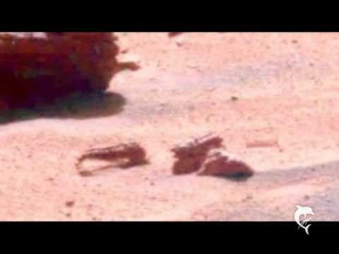 Insect Fossils on Mars Are There Insects on Mars