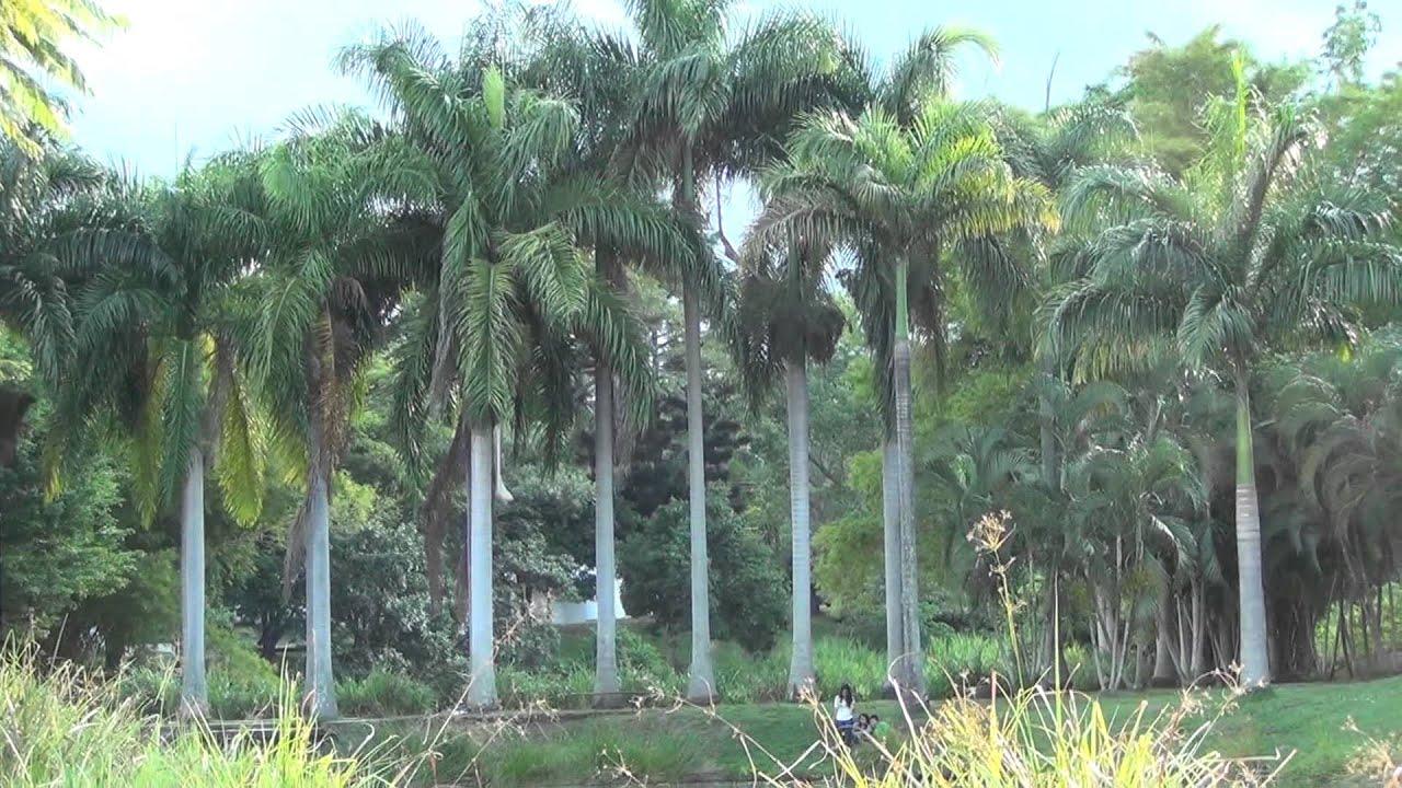 Cali mi cali bella lago de la babilla en ciudad jardin for Cali ciudad jardin