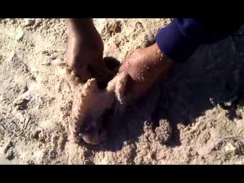 technique_de_peche;peche au poulpe a tunis