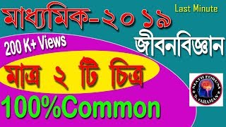 MADHYAMIK LIFE SCIENCE SUGGESTION 2019//Madhyamik Life Science Suggestion 2019_In WBBSE.
