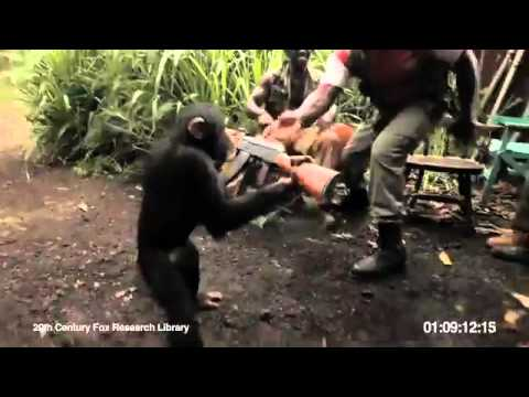 FUNNY! Ape Goin Wild With An Ak-47 In West Africa !