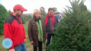 How to Select the Perfect Christmas Tree - Martha Stewart