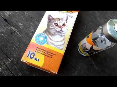 Конъюнктивит у кошек. Чем лечить?