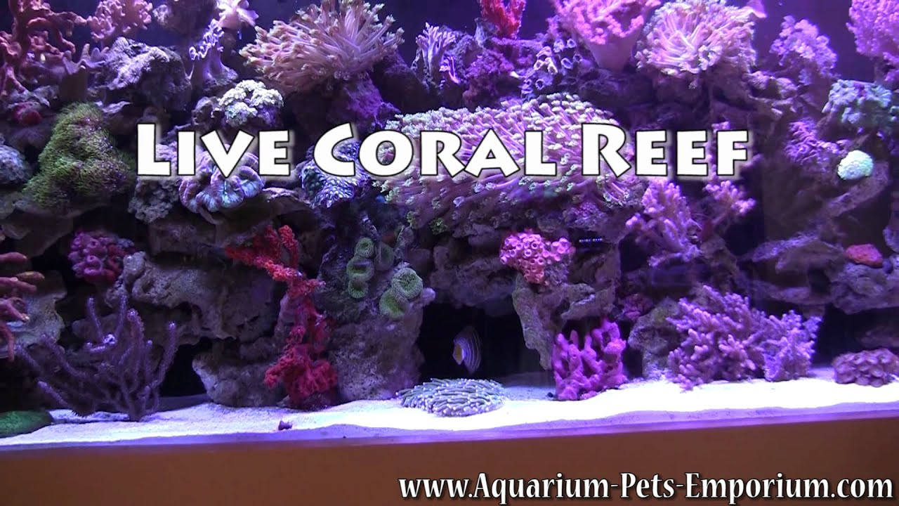 Local aquarium store in miami exotic aquariums fish for Fish store miami