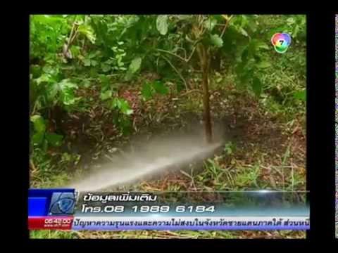 สารคดีเกษตร_ดูแลผักหวานป่าช่วงฝนตก จ สระบุรี