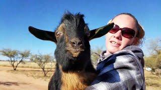 Last Week On Blue Cactus E29 - Flying Goats