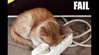 Pet Fails Compilation #7