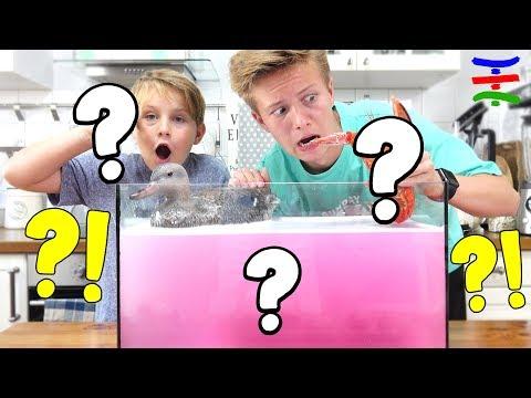 Whats in the Box? Unterwasser Challenge mit Tieren