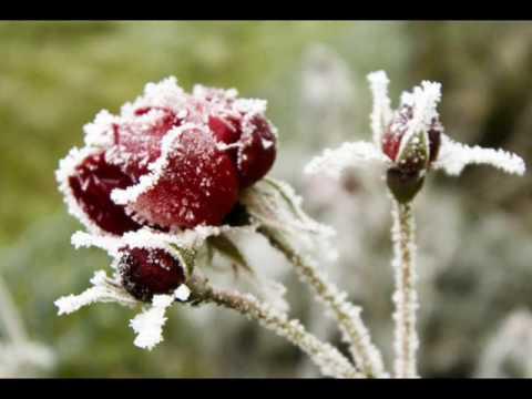 Аквариум, Борис Гребенщиков - Зимняя роза
