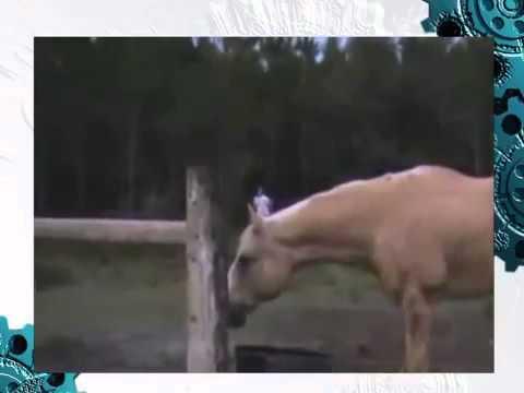 Жесткая погоня! Парня до смерти напугала корова!