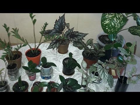 Излишки комнатных растений.ОСВОБОЖДЕНИЕ ПОДОКОННИКА.