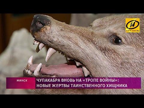 Чупакабра держит в страхе небольшой город Ганцевичи Брестской области