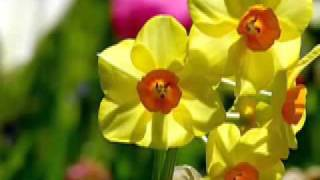 I Love You Lord lindas imagenes de flores.flv