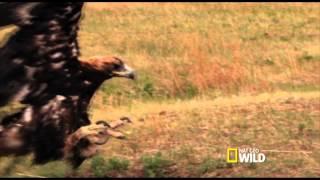 Secrets Life of Predators