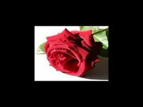 Musikang Bayan - Rosas Ng Digma