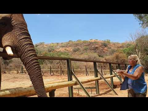 Elefant Santuary Hardberpoort Dam South Africa