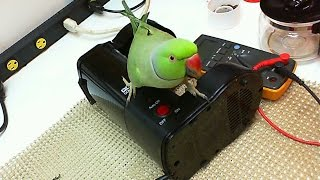 Very cheap DIY Coffee Machine repair for one of the most common faults