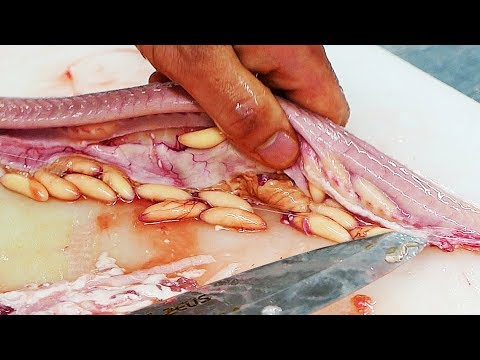 Korean Street Food - HAGFISH Seafood Korea