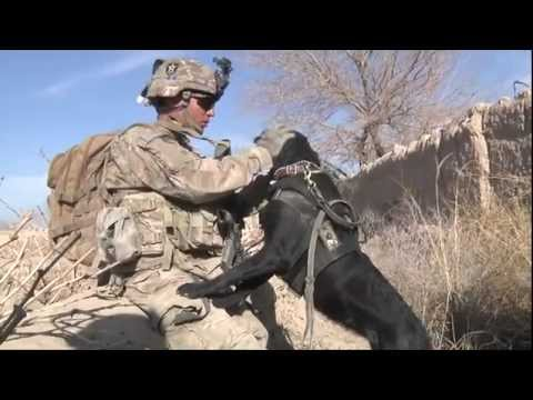 One of America s Four-Legged Warriors