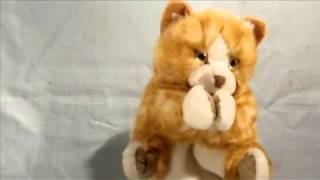 Kitty Cat Hand Puppet Wants Cream (FunWithPuppets.com)