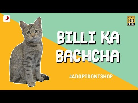 Billi Ka Bachcha - Ankur Tewari | Bachcha Party - Cutest Cat Video