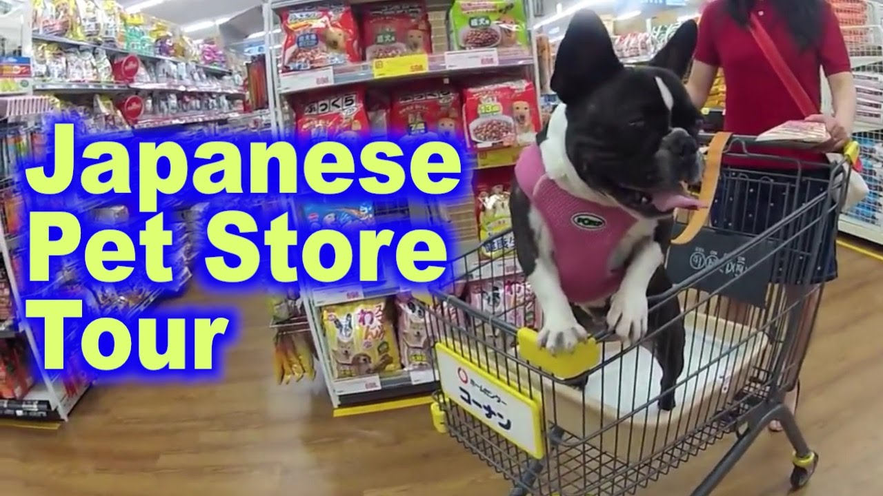 Pet store in a japanese home center gopro japan video for Fish and more pet store