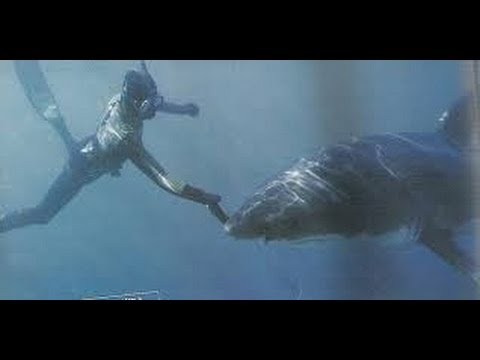 Why Great White Sharks Attack(full documentary)HD