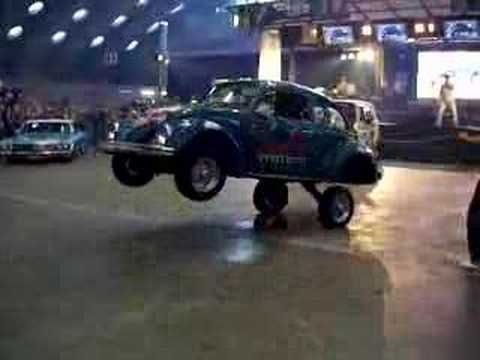 Crazy Lowrider Beetle