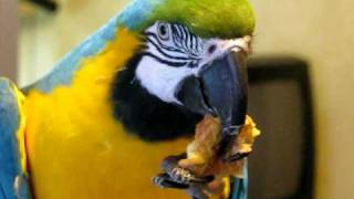 Tiki The Blue and Gold Macaw: Oh It