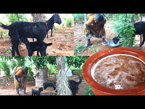 வெயிலுக்கேற்ற பாரம்பரிய பானகம்  | Panakam In Tamil | Traditional Panakam | Refreshing Summer Drink