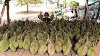 My Baby Eating Durian - Holiday With Family Traveling To Durian Farm - My Food My Lifestyle