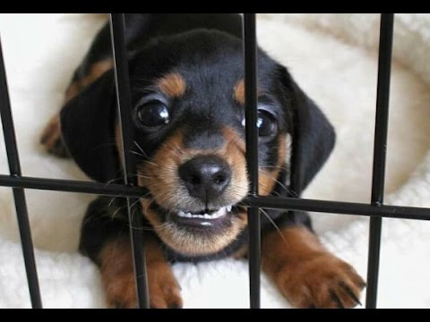No Charges For Cops Shooting Puppies, Flashbanging Babies...