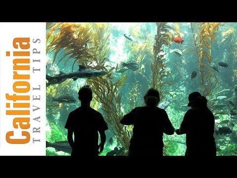 Birch Aquarium - La Jolla - San Diego Attractions