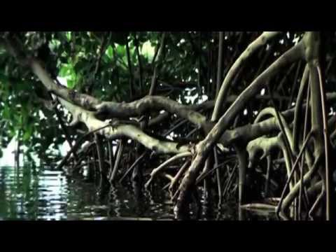 agua crucero cucharillas despegue kayak  marzo 06 2009 Vimeo HD