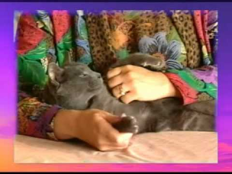 SOOTHING CAT MASSAGE