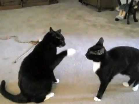 Cats Like Wrestling
