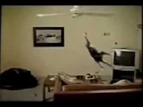 stupid cat jumps into fan