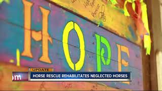 Miniature horses rescued from Polk vets now in good hands