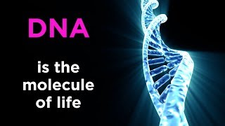 Introduction to Biology: What is Life?