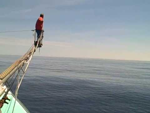Blue Fin Tuna Fishing in the Gulf of Maine. (Harpoon)