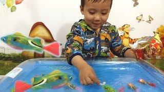 TUẤN MINH GIỚI THIỆU NHỮNG CHÚ CÁ ĐỒ CHƠI BIẾT BƠI DƯỚI NƯỚC  _  ĐỒ CHƠI CÁ ROBO FISH