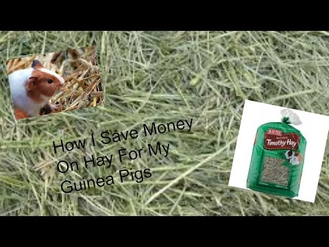 How I Save Money On Hay For My Guinea's