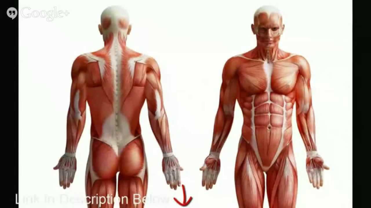 Human anatomy homework help. nhasachvietly.com