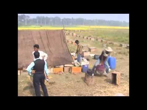 Honey Bangladesh 2