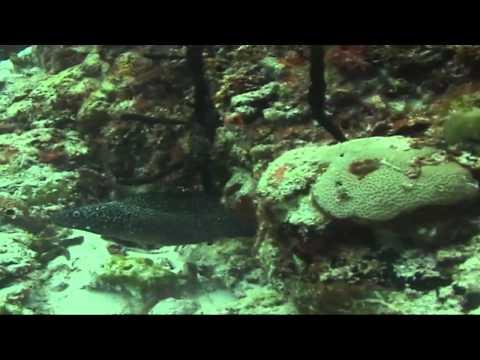Underwater Explorer - Cozumel Scuba Club