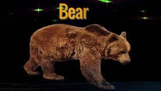 Bear Spirit Animal. | what is a spirit animal .