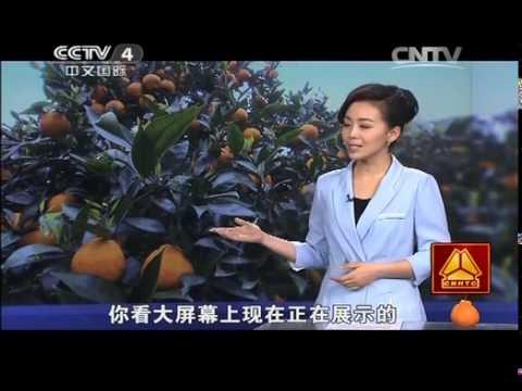 中國-走遍中國-20140421 花果同樹的奇異果柑