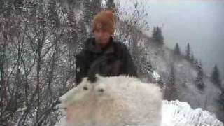 2009 BC Mountain Goat Hunt - Clip 3
