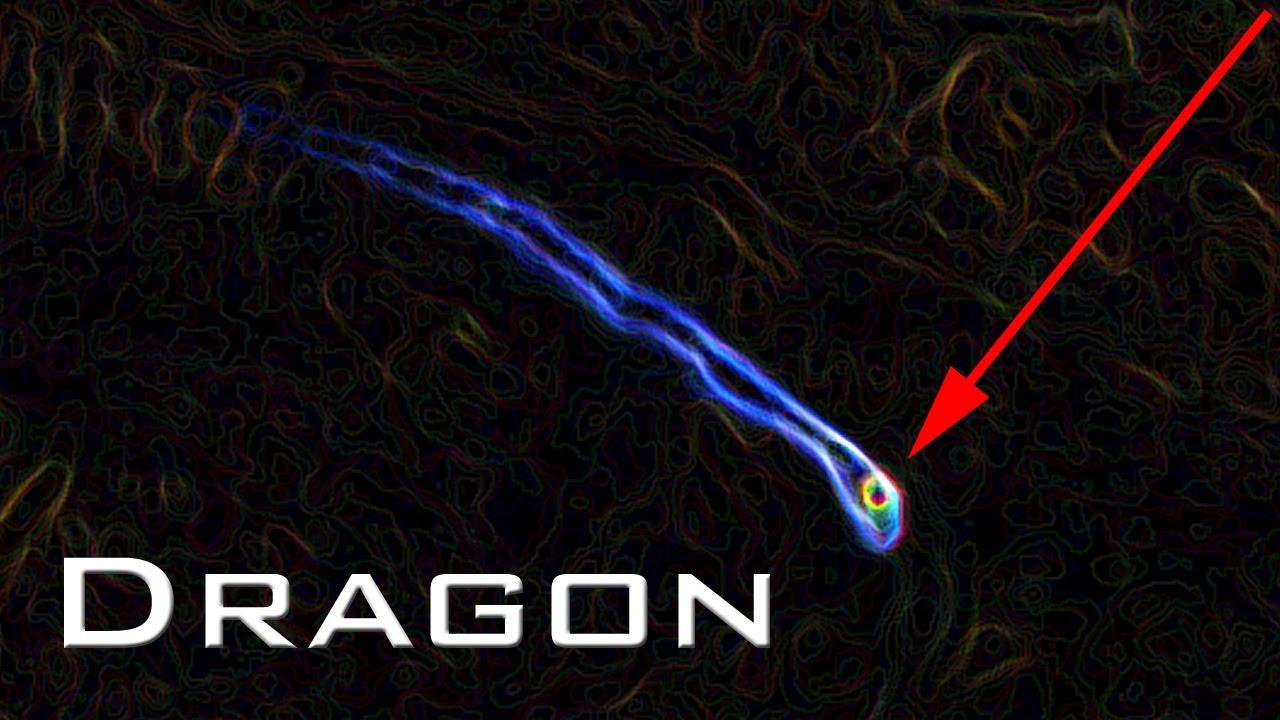 chinese real dragon