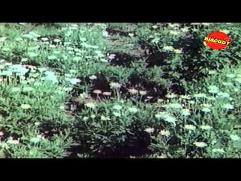 Om Om Maayaamaalavagowla   Swathu (1980) Malayalam Movie Songs   Music  By G Devarajan video